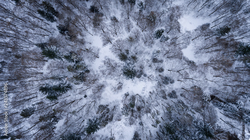 Aerial view on the snowy trees in winter time, Czech republic. Canvas Print