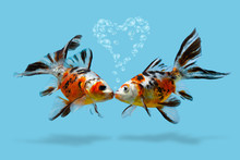 A Couple Of Fishes With Heart Shaped Air Bubbles, Kissing Lovers, Love, Romance, Saint Valentines Day, Collage Of Gold Fish Isolated On Blue Background