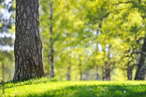Fotografia, Obraz  Sunny day in the park in springtime