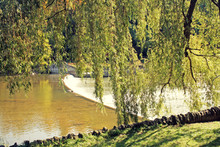 Willow By A Little Dam