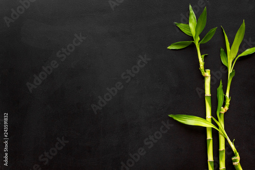 Asia background. Chinese, japanese background. Bamboo branch on black background top view copy space