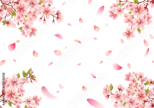 Papel de parede Cherry blossom sakura frame on white background