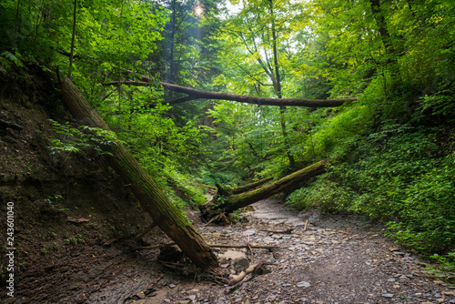 Walking Path along the River at Cuyahoga Valley National Park Canvas-taulu