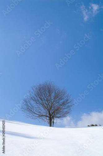 Fotografie, Obraz  A single tree on snow - 雪原の一本木