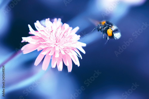 Amazing artistic natural background. Bumblebee flying over fanta