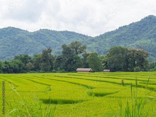 Poster Rijstvelden Landscape rice field Thailand.