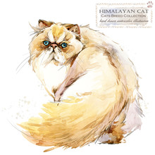 Cat. Watercolor Home Pet Illustration. Cats Breeds Series. Domestic Animal.