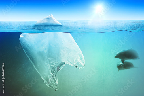 Poster Glaciers Two dolphins swimming near plastic bag in the open sea