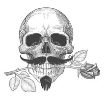 Human Skull With Mustache And Rose. Skull With Rose In The Teeth, In Love. St. Valentine's Day Illustration