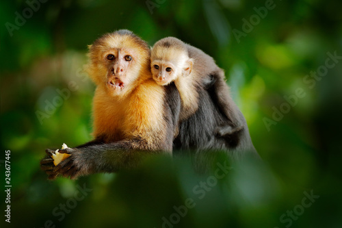 Fotografija  Monkey with young