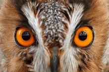 Detail Of Owl Eyes. Close-up P...