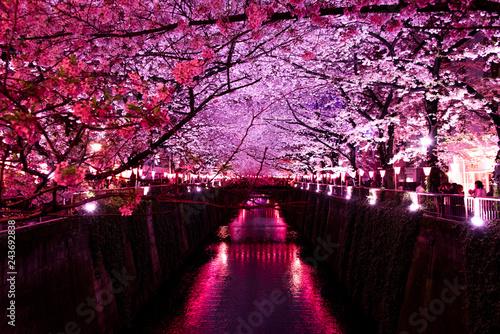 Spoed Foto op Canvas Bordeaux 夜桜と川
