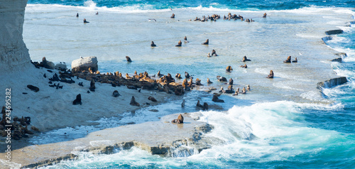 Rookery of fur seals on Valdes peninsula Canvas Print