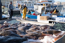 Fresh Flatfish Of Mediterranean Sea - Fishing Market On The Dock Of Marseille Vieux Port In France