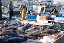 Fresh Flatfish Of Mediterranea...