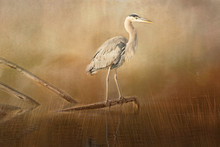 Textured Photograph Of A Blue Heron Standing On A Branch In A Golden Pond