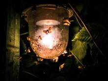 Moths At The Lamp