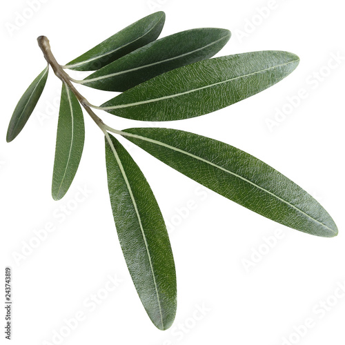 Fotografía  Olive branch, isolated on white background