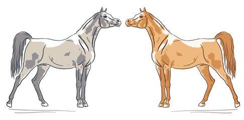 Arabian horses silhouette, vector illustration