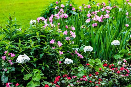 Various Flowers Set Pink Garden Tradescantia White Phlox