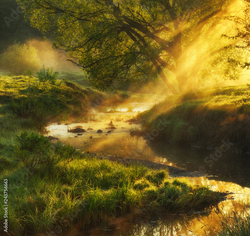 spring morning valley of the picturesque river. foggy dawn Wall mural