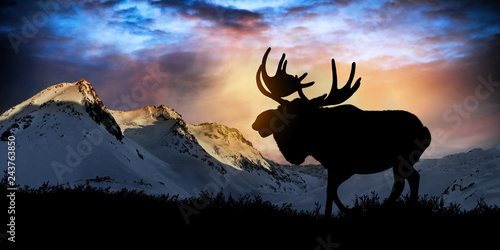 Moose in wild nature landscape