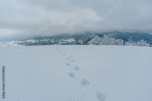 Poster Donkergrijs Footprints on the fresh snow in the mountains. Beautiful winter landscape