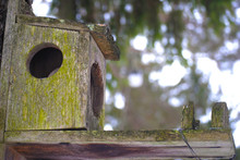 Birdhouse With Moss Hanging Fr...