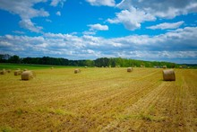 A Scenic View Of A Freshly Cut Winter Wheat Field With Bales Of Straw Scattered On The Land Under Partly Cloudy Skies. Raleigh, North Carolina.