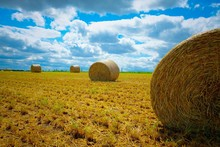 Puffy Clouds Litter The Sky Above A Freshly Cut Winter Wheat Field With Bales Of Straw Scattered On The Land. Raleigh, North Carolina.