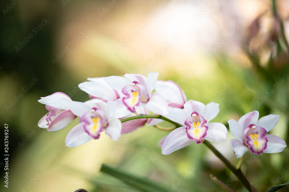 Orchid Christmas Tree.Photo Art Print Cymbidium Orchid Orissa Christmas Tree
