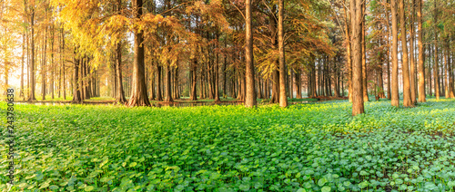 Aluminium Prints Autumn Beautiful autumn forest and green aquatic plants scenery,panoramic view