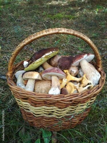 Photo Full basket of mushrooms in the forest