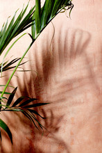 Palm Plant With Shadows With Pink Plaster Wall