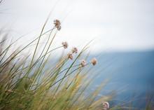 Wild Iris In Drops Of Dew On A Summer Meadow