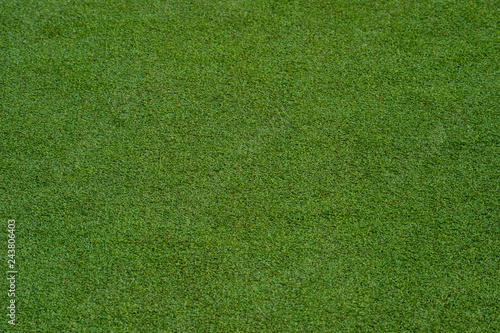 green grass turf floor texture background Canvas Print