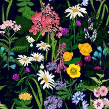 Seamless Background With Wild Flowers. Floral Pattern On Black Background.