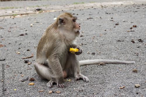 Fotografie, Obraz  Phang Nga, Thailand