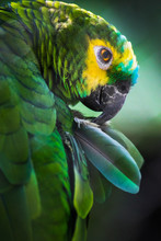 Green Parrot Green Background
