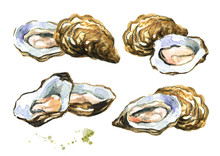Fresh Oysters, Seafood Set. Watercolor Hand Drawn Illustration Isolated On White Background