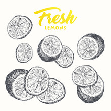 Fresh Lemons Vector Banner Template. Sketch Fruit Clipart. Sliced Lemons Engraving Style Drawing. Handwritten Calligraphy, Lettering. Isolated Set Citrus Color Design Element. Shop Sign, Store Logo
