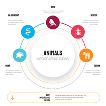 Abstract Infographics Of Anima...
