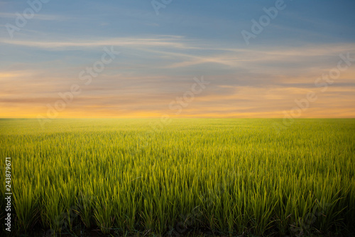 Foto auf Gartenposter Reisfelder Meadow field or Green Terraced Rice Field in Asia Thailand . Freedom Refreshed grass cold weather Feeling in garden Joyful at times of morning . beautiful day concept.