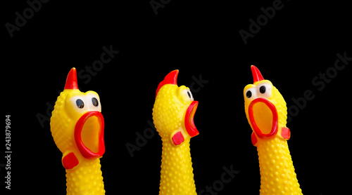 squawking chicken or squeaky toy are shouting and copy space isolated on Black background Tapéta, Fotótapéta