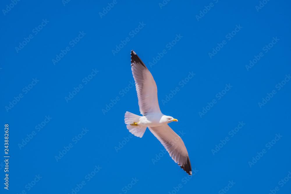 seagull mouette sky
