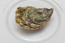 Closed Oyster Plate