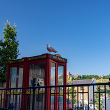 DOVER, UK – Jun 30, 2018: Seagull Sits On A Red British Phone Booth