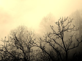 Sepia of a Group of Trees with Leafless Branches and Fog in the Rural Village...
