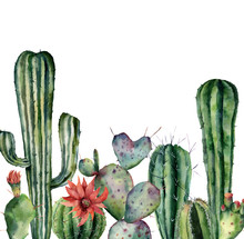 Watercolor Card With Cactus. Hand Painted Print With Desert Plants Isolated On White Background. Flowering Cacti Card For Design, Print. Nature Botanical Illustration