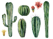 Watercolor Cacti And Flowers Set. Hand Painted Dessert Plants Isolated On White Background. Botanical Illustration For Design, Print Or Card